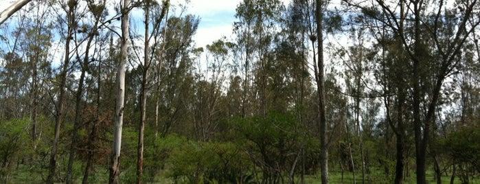 Parque Nacional El Cimatario is one of Posti che sono piaciuti a Jose.