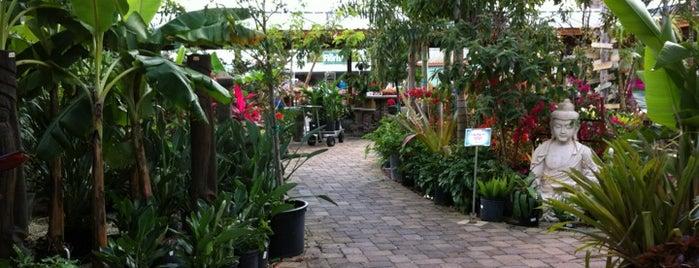 Flamingo Road Nursery is one of Posti salvati di Bobbie.