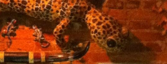 Geckos is one of Locais salvos de Mieko.