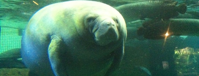 Dallas World Aquarium is one of Must See Places in Dallas.