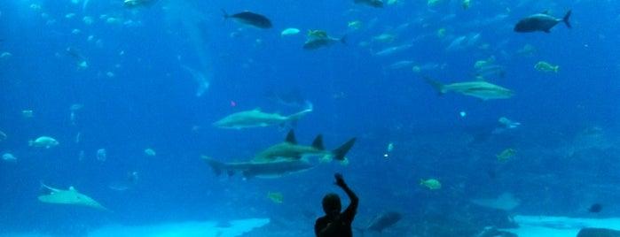 Georgia Aquarium is one of ATL.