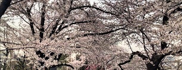 Chidorigafuchi Park is one of Japan.