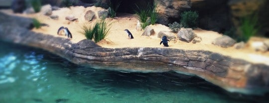 Manly Sea Life Sanctuary is one of Sydney.