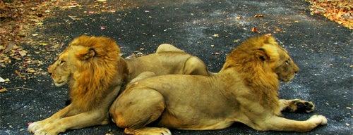 Sanjay Gandhi National Park is one of Mumbai, India.