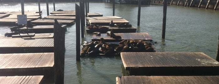 Sea Lions at Pier 39 is one of USA Trip 2013 - The West.