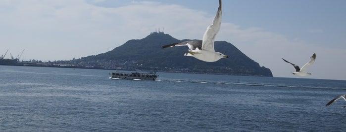 津軽海峡フェリー 函館フェリーターミナル is one of Lugares favoritos de 高井.