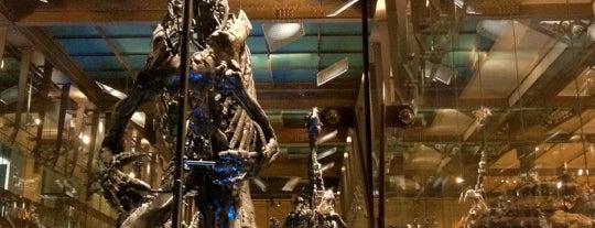 Muséum des Sciences naturelles is one of BXL to do.