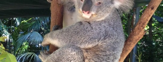 Koala Park Sanctuary is one of Australia.