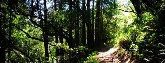 Serpentine Prairie Trail is one of Berkeley/Oakland/East Bay.