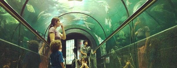 Phuket Aquarium is one of Lieux qui ont plu à Gordon.