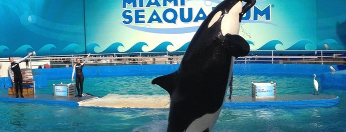 Miami Seaquarium is one of Family Friendly Animal Attractions.