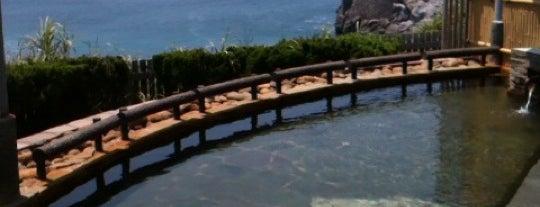 まました温泉 is one of Japan.