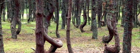 Танцующий лес is one of Galinaさんの保存済みスポット.