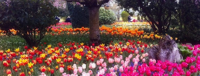Skagit Valley Tulip Festival is one of Far Far Away.