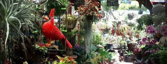 The Plant Man is one of San Diego.
