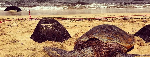 Laniakea (Turtle) Beach is one of USA Trip 2013.