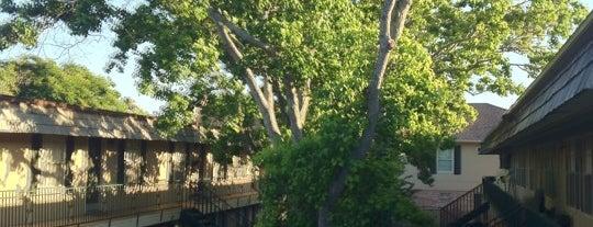 Alameda Apartments is one of Cat : понравившиеся места.
