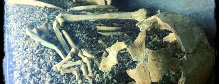 Museu d'Arqueologia de Catalunya is one of 101 llocs a veure a Barcelona abans de morir.