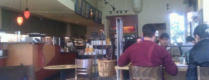 Starbucks is one of DJ Lizzie : понравившиеся места.
