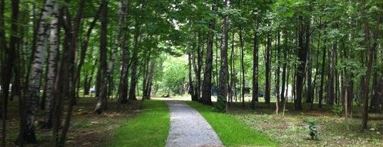 Sokolniki Park is one of Walking.