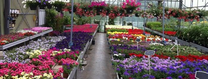 Garden Center Wemmel is one of Tempat yang Disukai Yves.