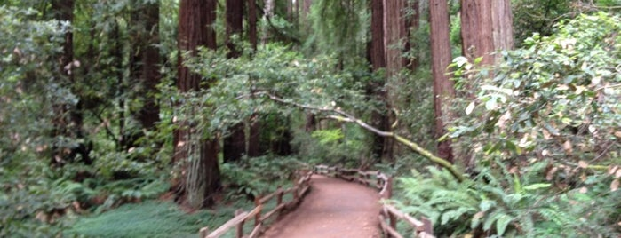 Muir Woods National Monument is one of San Francisco et sa région.