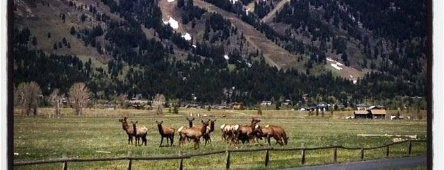 Jackson Hole Mountain Resort is one of minhas viagens *.*.