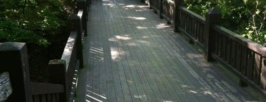 Grant Park Seven Bridges is one of Locais curtidos por Matthew.