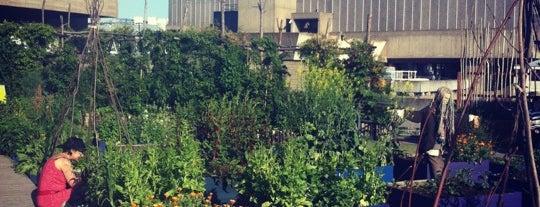 Queen Elizabeth Hall Roof Garden is one of Best of London.