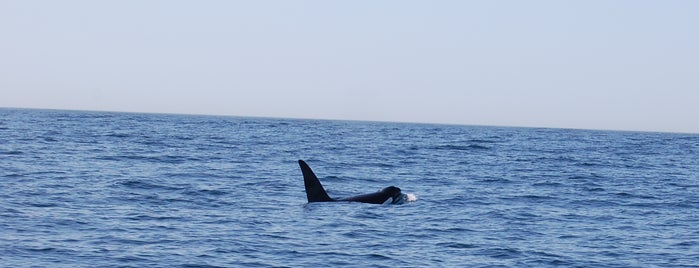 Monterey Bay Whale Watch is one of San Francisco.