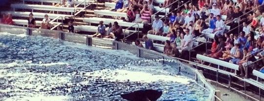 SeaWorld Orlando is one of I  2 TRAVEL!! The ATLANTIC COAST✈.