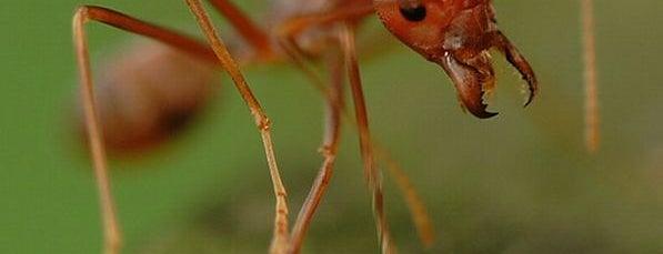 Una Hormiga En El Piso is one of Lugares raros.