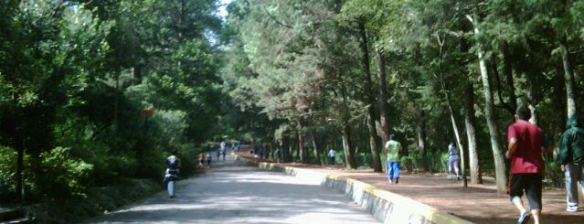 Bosque de Tlalpan is one of Para correr.