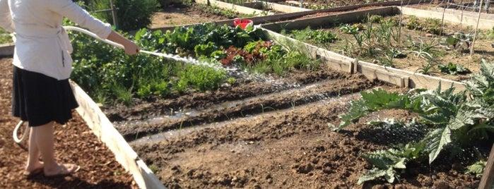 El Sereno Community Garden is one of สถานที่ที่ Miguel ถูกใจ.