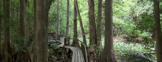 Highlands Hammock State Park is one of Michelleさんの保存済みスポット.