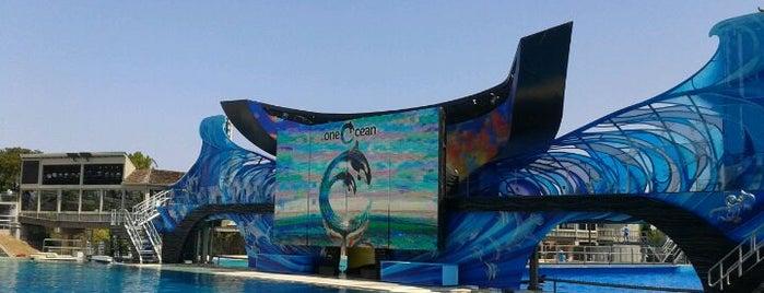 SeaWorld San Diego is one of San Diego.