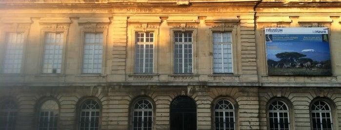 Muséum d'histoire naturelle is one of Pau 님이 저장한 장소.