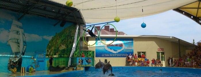 Дельфинарий, Океанариум, Пингвинарий is one of Andrew 님이 저장한 장소.