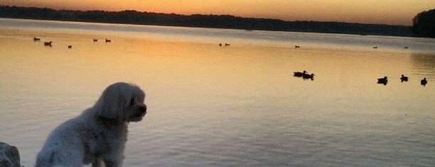 Lake Crabtree is one of jiresell 님이 좋아한 장소.