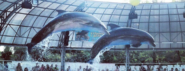 Дельфинарий Немо / Nemo Dolphinarium is one of Locais curtidos por Виктория.