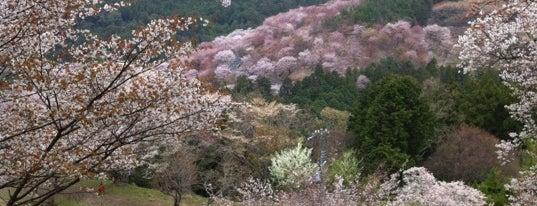 吉野山 中千本 is one of アウトドア&景観スポット.
