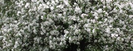 Яблоневый сад is one of С Мишей.