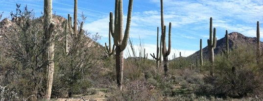 Saguaro National Park West is one of AZ.