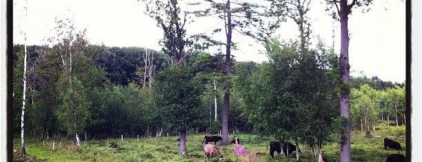 Landschapspark Drongengoedbos is one of Ian'ın Beğendiği Mekanlar.