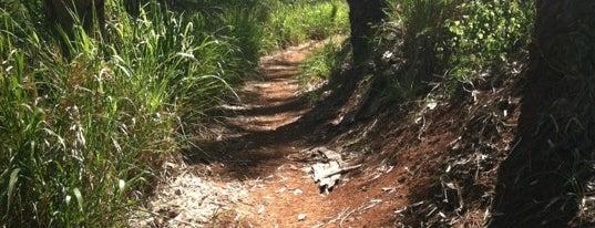 Mahana Ridge Trail is one of Orte, die islisha gefallen.
