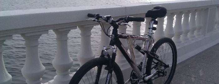 Bayshore Bike Trail is one of Best of South Tampa Outdoors.