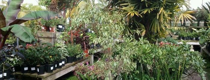 Walter Andersen Nursery is one of San Diego.