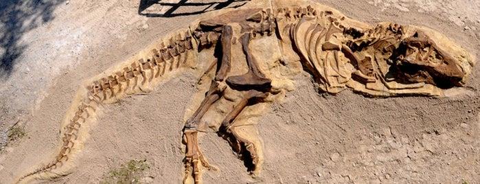 Hadrosaurus Foulkii Statue is one of Anthony'un Kaydettiği Mekanlar.