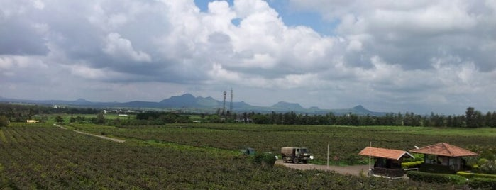 Sula Vineyards is one of Damodarさんのお気に入りスポット.