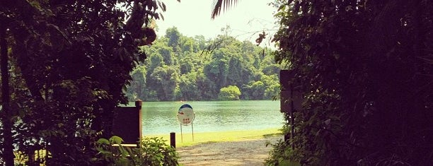 MacRitchie Nature Trail is one of Trek Across Singapore.